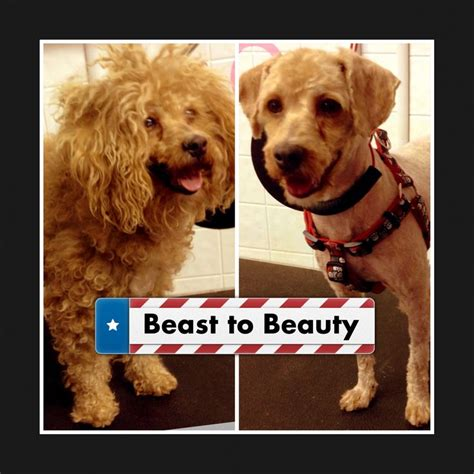 Harga Makeover X And The Beast 1000 images about before and after grooming photos on