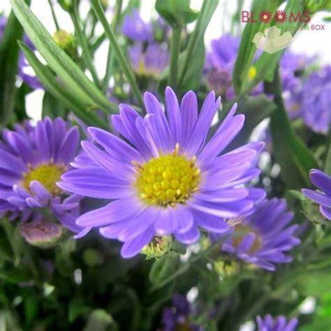 Montecasino Flower Gallery Aster Flower Gallery