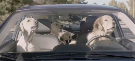 subaru golden retriever commercial who are the dogs in the subaru commercials the news wheel