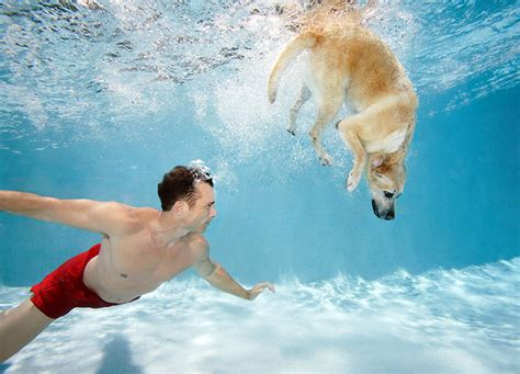 can all dogs swim can all dogs swim pets and docile