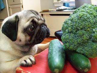 dogs broccoli what vegetables are for dogs pets world