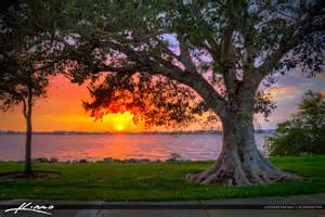 Rocking Chair Bench Fig Tree At Park During Sunset Vero Beach Florida Indian River