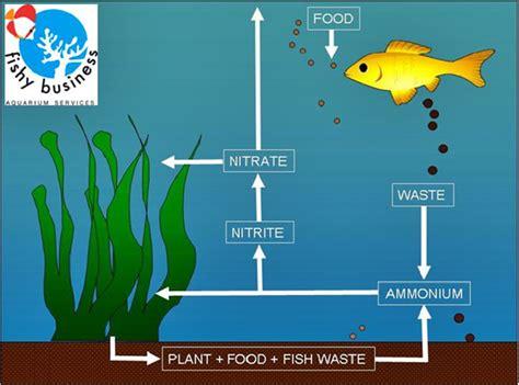 Bioball Terbaik filter terbaik untuk kolam ikan koi akuarium ikan hias