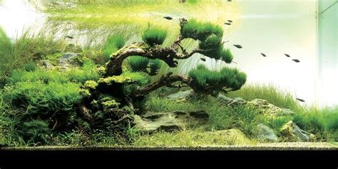 takashi amano aquascape the art of aquascaping joe blogs