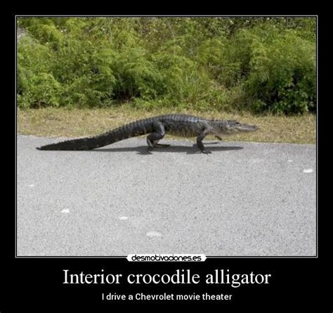 Interior Crocodile Alligator Vine by Interior Crocodile Alligator Desmotivaciones