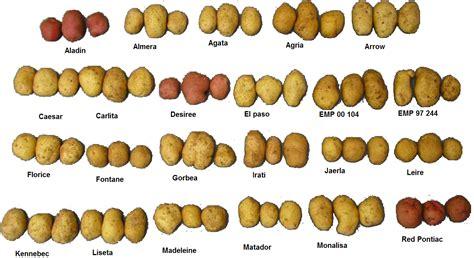 file several varieties of potatoes png