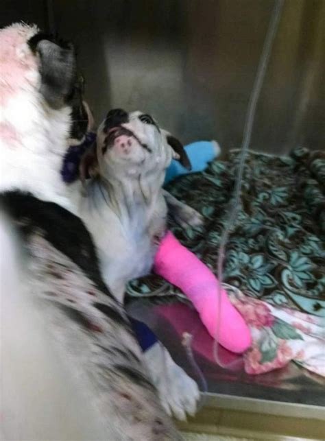 rescue dogs rock nyc rescue comforts injured puppy who s been terribly just like him metro news
