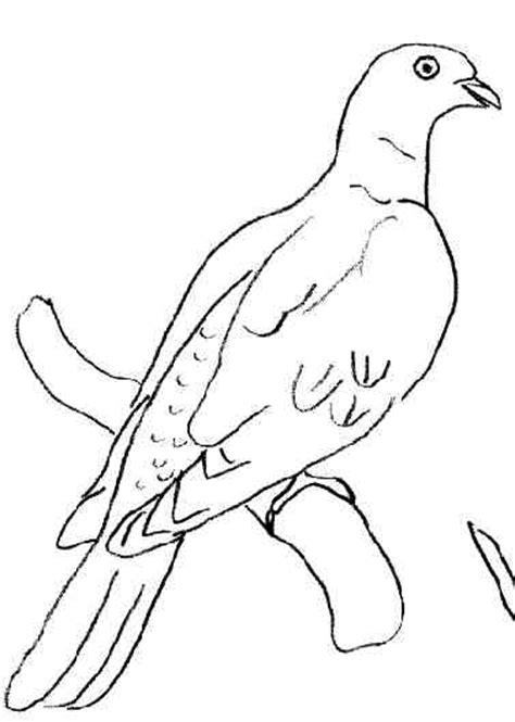 comment cuisiner des palombes coloriage pigeon ramier