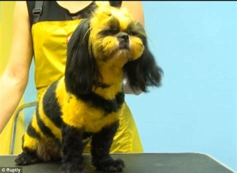 dogs with yellow they looked boring before pet styling salon dyes cats to look like green dragons
