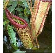 Plante Carnivore  En Images Video Dinosoria
