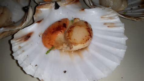 cucinare capesante in padella capesante in padella le ricette di jessy
