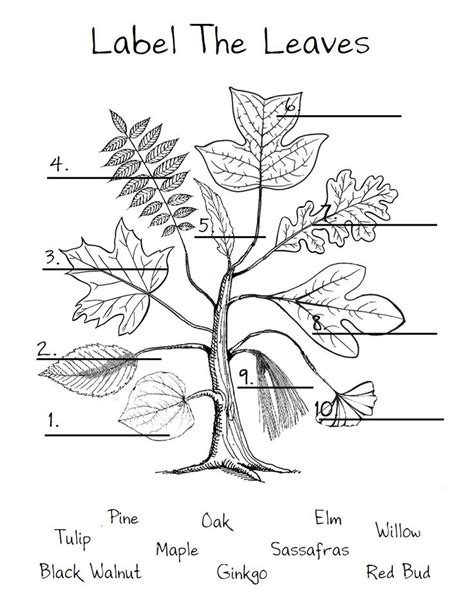 willow pattern worksheet 115 best images about botany on pinterest nature journal
