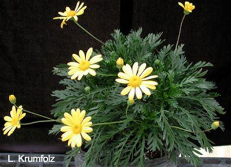 bush daisy university  florida institute  food