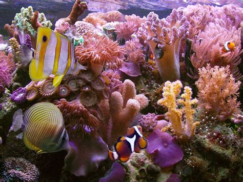 Coral Reef L by 15 Pics Of Amazing Coral Reefs And Fishes