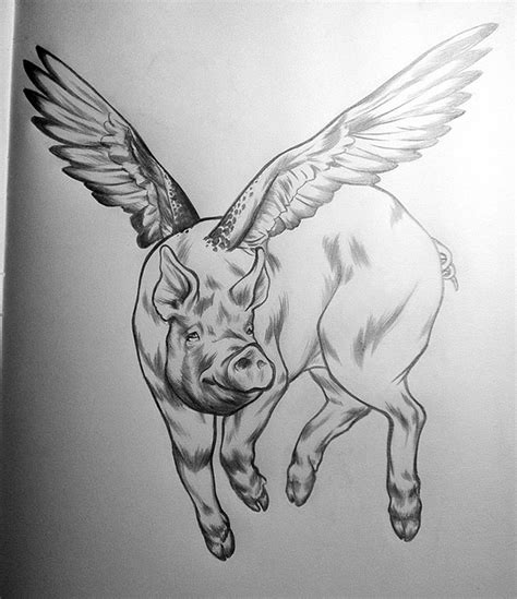 Flying Pig on Behance Flying Pig Drawing