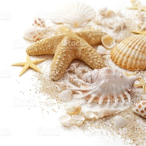 shells and sand stock photo 511809108 istock
