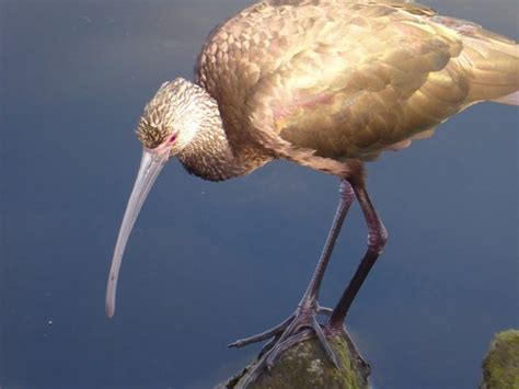 Warner And Pch - bolsa chica ecological reserve huntington beach ca top tips before you go with