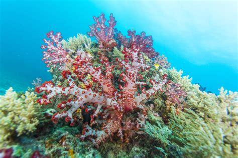 Selang Snorkel Scuba Diving scuba diving in gili selang indonesia dive site
