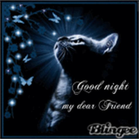 gif good night wallpaper good night cat pictures p 1 of 21 blingee com