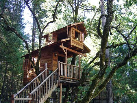 Tree Houses For by Tree Houses For Austintreehouses Page 2