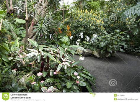 Garden Flowers And Plants Subtropical Garden Flowers Plants Stock Photo Image 44175339