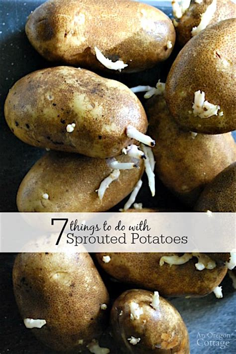 7 things to do with sprouted potatoes