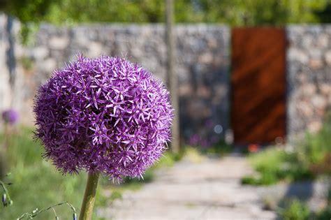 piante perenni per giardino roccioso un giardino roccioso con angolo relax e barbecue casa e