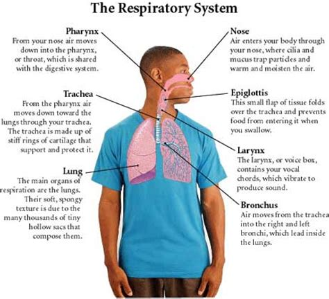 Respiratory Description by Human 2 0 Project Torie Abrahams