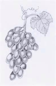 dessin grappe de raisin pictures to pin on pinterest