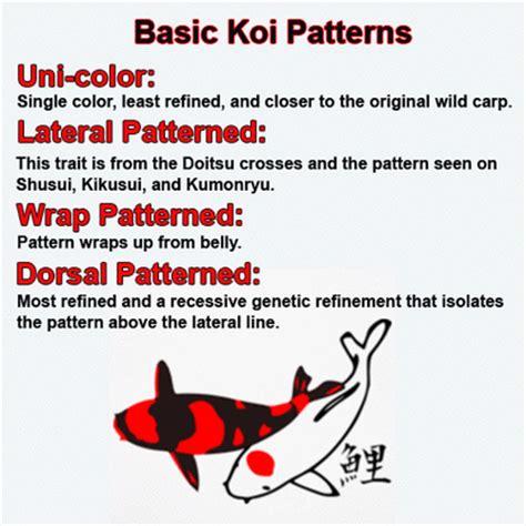 koi colors koi colors gallery