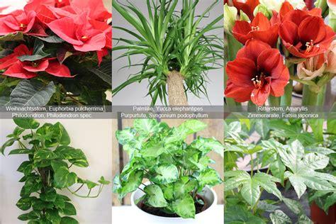 Katzen Giftige Zimmerpflanzen Bilder by Giftige Pflanzen F 252 R Katzen Gef 228 Hrliche Zimmerpflanzen