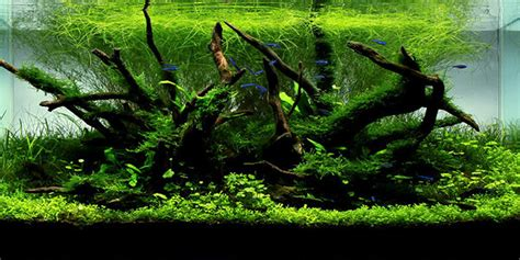 Amano Aquascaping Understanding Nature Aquascaping Style The Aquarium Guide