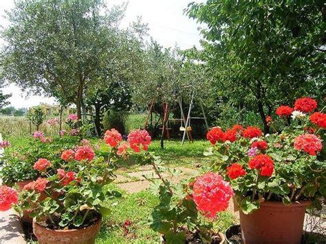 giardino te giardino fai da te fare giardinaggio come realizzare