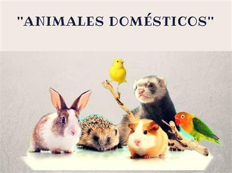 imagenes de animales llaneros animales domesticos