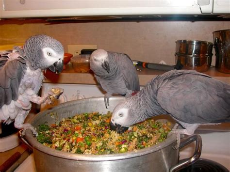 african love birds favorite food food ideas