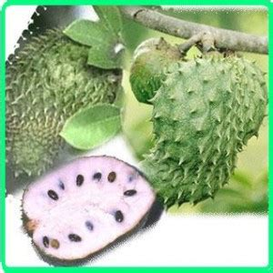 Obat Herbal Utk Katarak kandungan khasiat dan manfaat daun buah sirsak resep