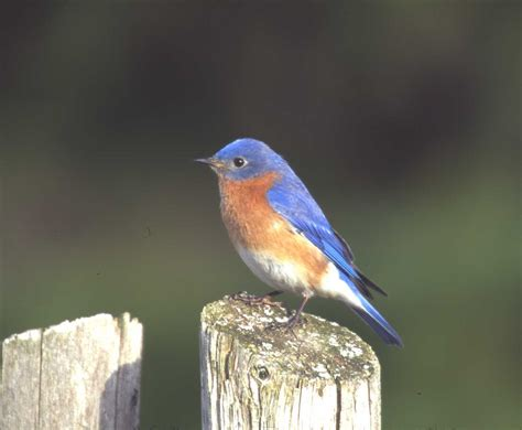 attract bug eating birds backyard birds