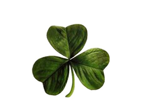 irish clover   clip art  clip art