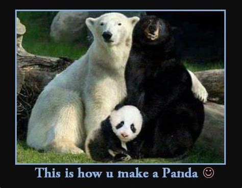 Sex Panda Meme - sex panda meme 28 images littlefun hey man take it