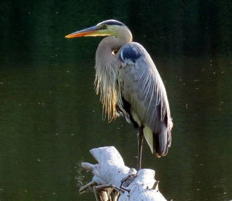 New Hshire Garden Solutions Exploring Nature In New Blue Heron Nh 2