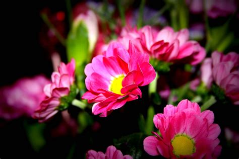 flower ke wallpaper download free flower wallpaper backgrounds wallpaper cave