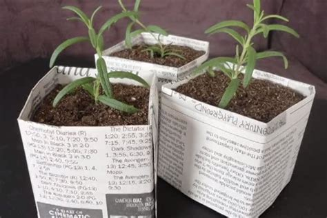 Paper Plant Pots - make seed starting pots with newspaper from scratch magazine