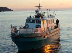 charter boat fishing whangamata blue ocean charters ltd the fishing website