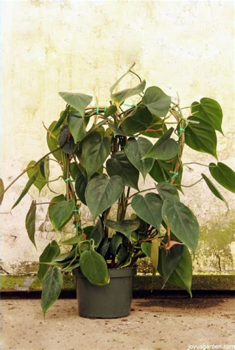 low light hanging plants 10 easy care houseplants for low light