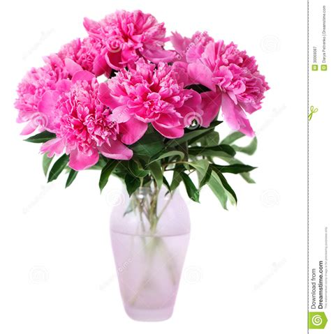 Pink Flowers In A Vase by Pink Peony Flowers In Vase Royalty Free Stock Photography