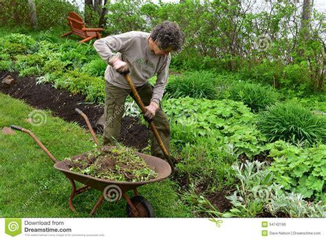 volunteer gardener digging in flowerbed stock photo