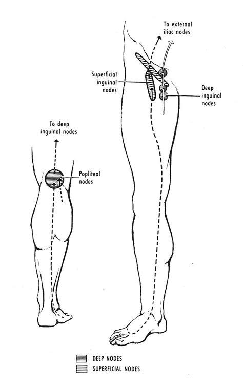 lymph node locations swollen lymph nodes leg memes