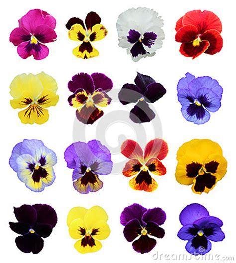 un insieme di fiori un insieme di 16 fiori della pans 233 fotografia stock
