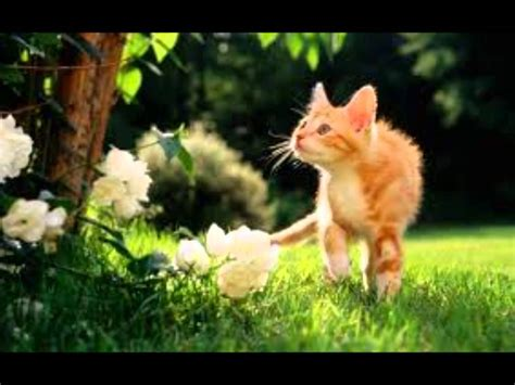 imagenes de animales terestres animales terrestres youtube