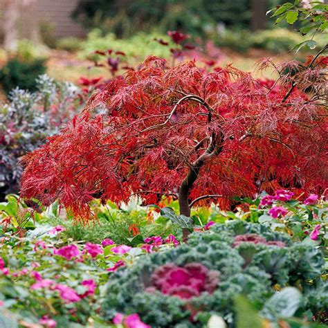 japanese maple trees for your yard gardens front yards